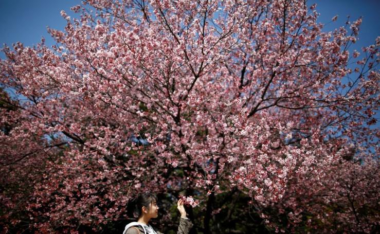 Floración temprana en Japón
