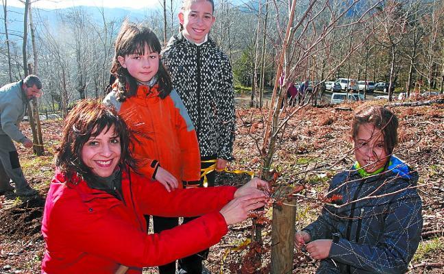 Cuarenta nuevas hayas para revitalizar los paisajes de Lakiola