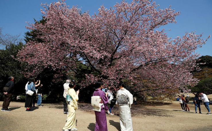 Llega la primavera a Tokio y Taiwan con los cerezos en flor