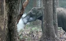 «¿Este elefante realmente está fumando?»
