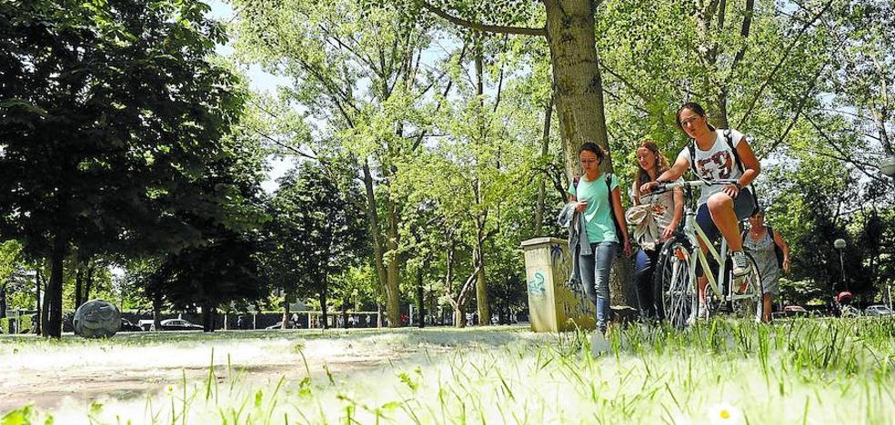 La contaminación por polen será «leve» en Euskadi esta primavera