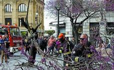 Retiran un árbol caído en el Boulevard