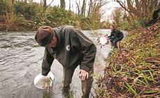 Salmones atrapados entre las presas