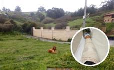 Un perro con tres denuncias por mordeduras ataca a un hombre que hacía deporte en Bizkaia