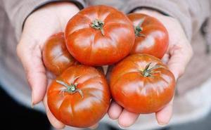 Demuestran que regar menos los tomates mejora su sabor y su valor funcional