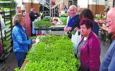 Arranca la venta de planta para huerta