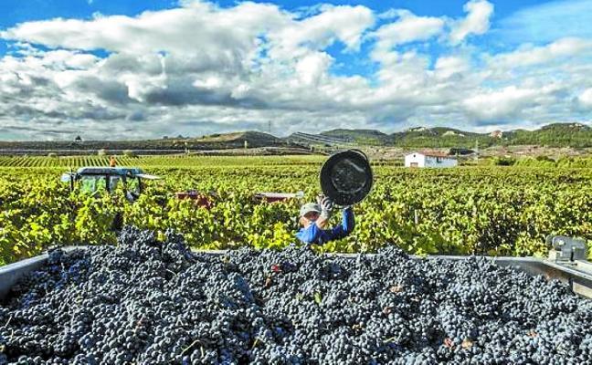 El Consejo Regulador califica de 'Muy Buena' la cosecha de Rioja de 2017
