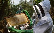 La UE prohíbe el uso de tres insecticidas peligrosos para las abejas