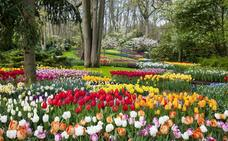 La apoteosis del tulipán