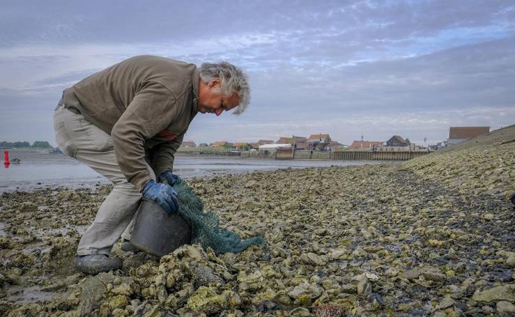 Conoce la granja de ostras de Yerseke