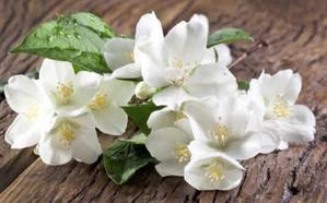La calle Urbieta acogerá el sábado la V Feria de Flores y Plantas de Hernani