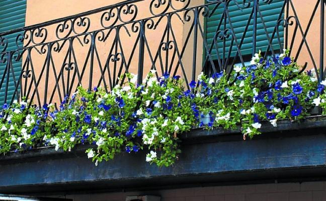 Llega el II concurso de ornato floral