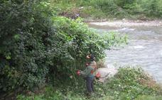 URA erradicó en 2017 especies invasoras en 51.000 metros de márgenes de ríos
