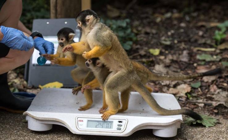 Midiendo a los animales