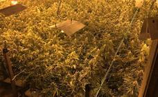 La Ertzaintza localiza 1.950 plantas de marihuana en un pabellón de Usurbil