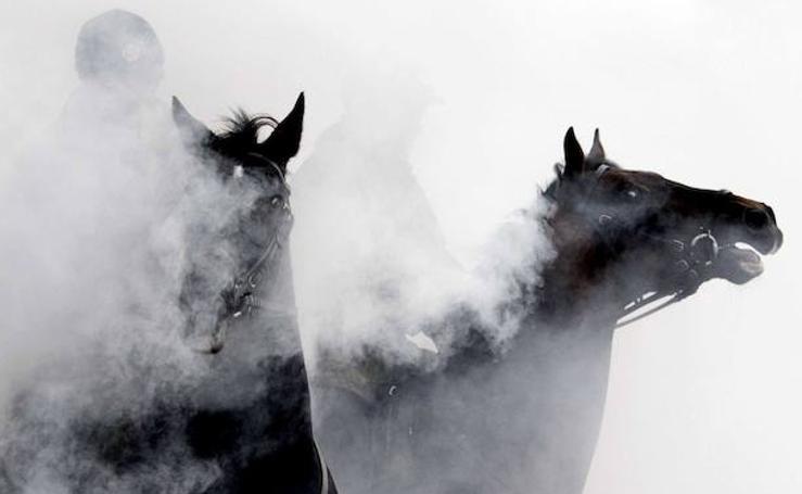 Los caballos de batalla, listos para defender el rey