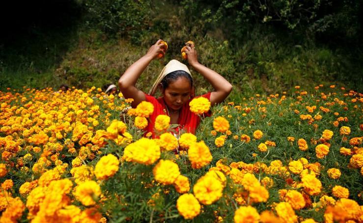 Flores para las oraciones
