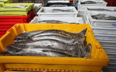 Europa propone reducir un 30% la pesca de merluza en el Cantábrico