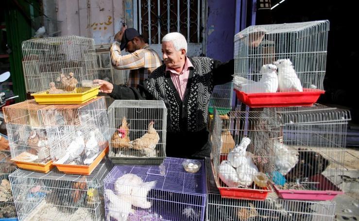 De gallinas a cachorritos