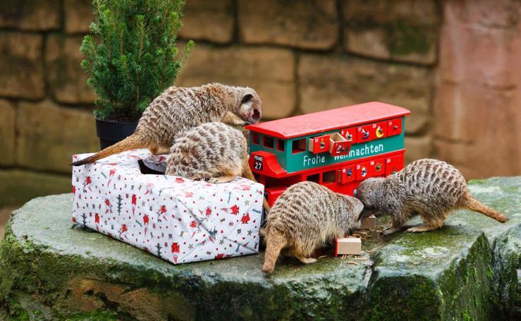 Papá Noel llega al zoo