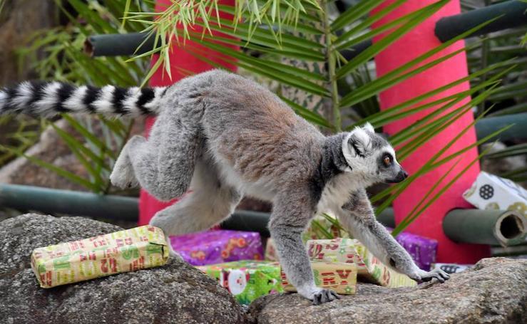 Los animales también reciben sus regalos de Navidad