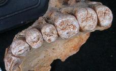 Hallan en Israel los restos más antiguos de humanos modernos fuera de África