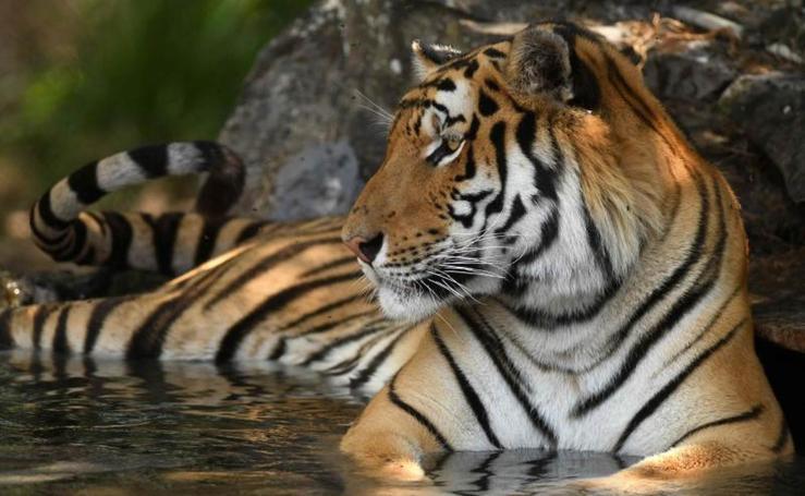 La fauna del Zoo de El Salvador