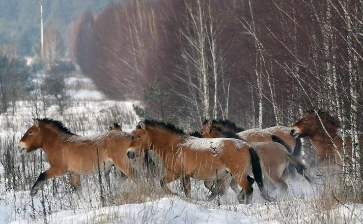 La belleza de los caballos
