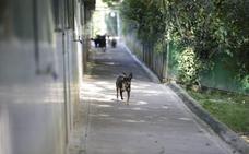 Arranca el juicio a dos veterinarios de la protectora de animales de Gipuzkoa acusados de maltrato