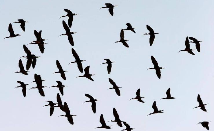 Aves sobrevuelan un observatorio en Jordania