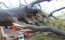 Herido de gravedad un niño de cinco años al caerle un árbol encima en San Sebastián