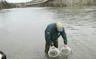 Gipuzkoa recuperará 365 kilómetros para mejorar la accesibilidad de las especies piscícolas a los ríos