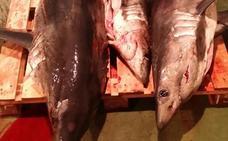 Incautan 20 ejemplares de tiburones protegidos en un barco en Ondarroa