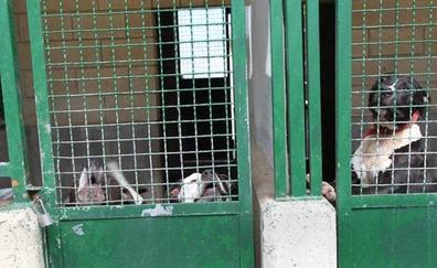 Un menor sufre heridas graves tras el ataque de dos perros de raza peligrosa en Mungia