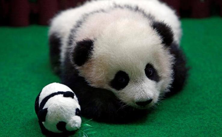 Nuevo juguete en el zoo