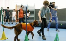 Una terapia con perros para prevenir el 'bullying'
