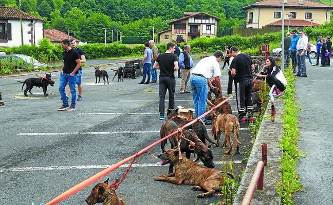 Doneztebe acogió el XXVI aniversario del perro 'presa navarro'