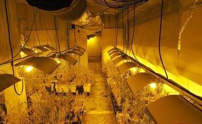 Desmantelan una plantación de más de mil plantas de marihuana en Plentzia