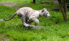 Las mejores imágenes de animales 'in fraganti'