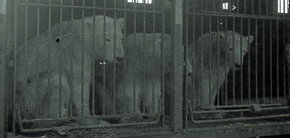 Animales salvajes y domésticos, reunidos en el circo Atlas