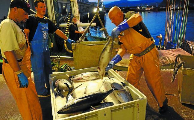 La primera descarga de bonito en los puertos de Gipuzkoa deja 136 toneladas