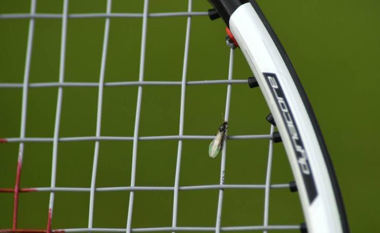 Las hormigas, un incordio en Wimbledon