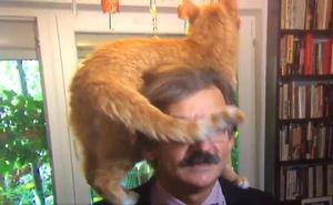 El gato que quería ser famoso
