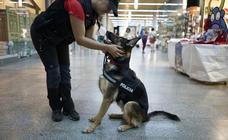 Perro policía en Pamplona