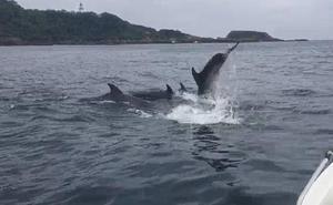 Los delfines visitan Hondarribia