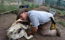 Los lobos: cura para el estrés postraumático