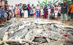 Una multitud enfurecida masacra a 300 cocodrilos en Indonesia