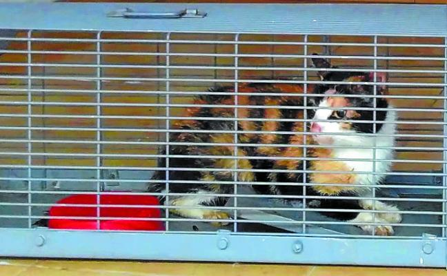 Un total de 49 gatos esterilizados
