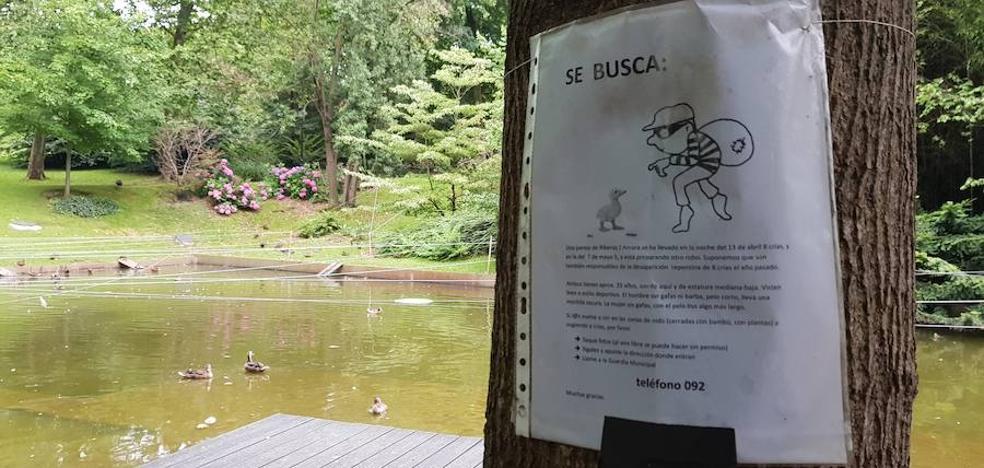 Un ladrón de patos anda suelto