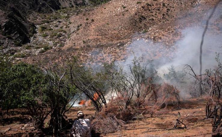 Quema de una plantación ilegal de marihuana en Baja California